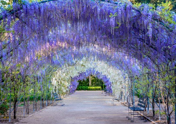 Adelaide Botanic Gardens | Self Storage Australia Adelaide