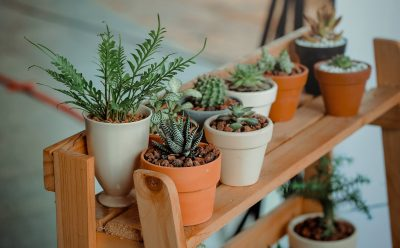 pot plants on stand