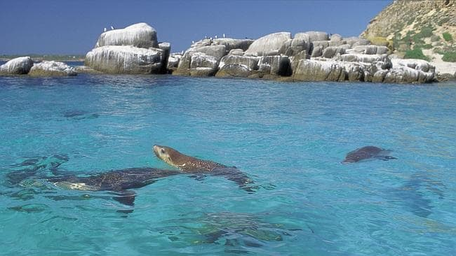 seals in Adelaide