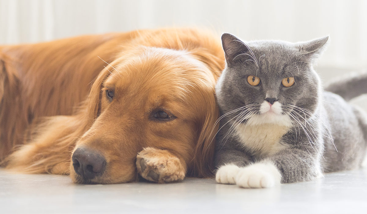 pet cat and dog sitting together