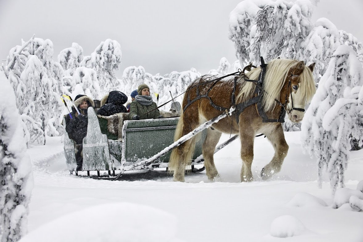 horse sledding in snow