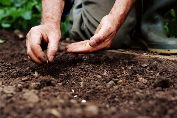 a man planting seeds into the soil of his garden bed