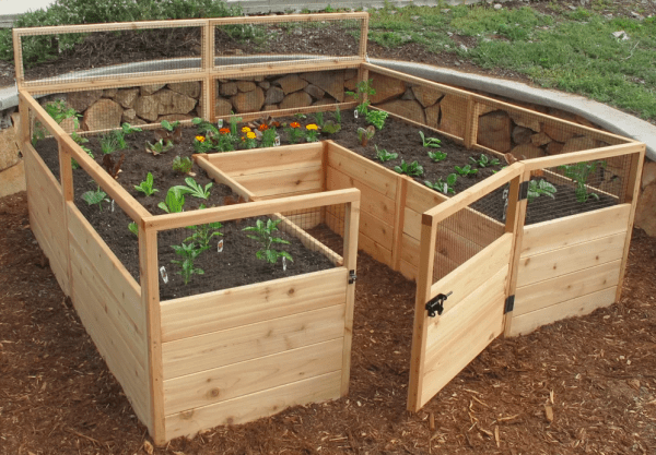 a small and simple fenced garden bed with plants sprouting