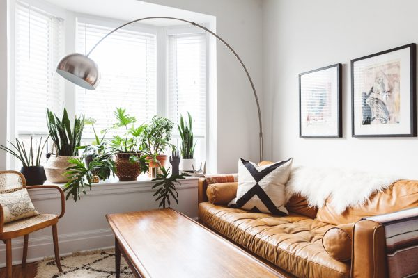 indoor plants lined up near the window in the living room