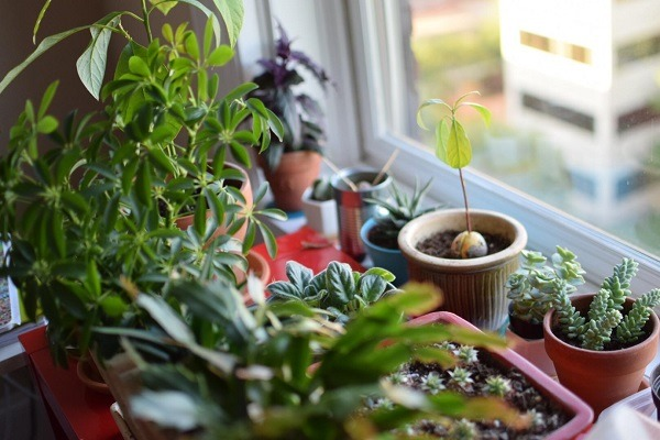 Asorted potted plants by the window